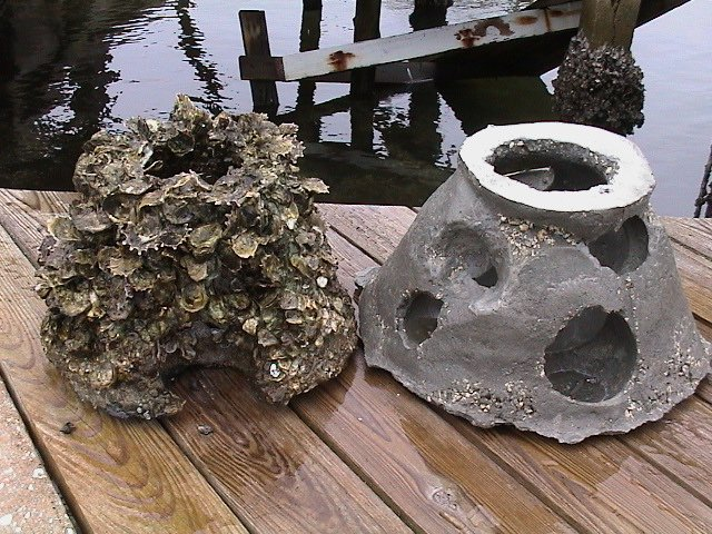Start your living shoreline with Oyster Balls in 1.5 ft. of water.