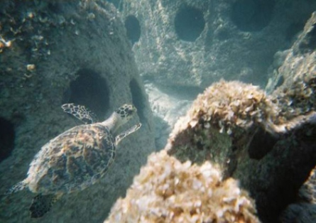 Photo Retreived from Karen Basley Sea Turtle Rescute