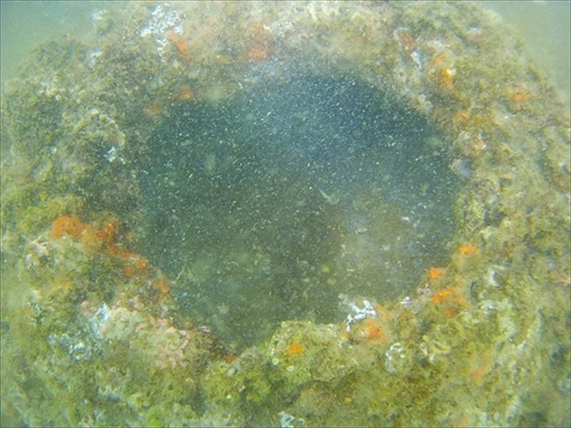 Sarasota Anglers reef 6-29-2013